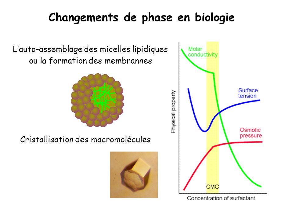 Changements de phase en biologie Lauto-assemblage des micelles lipidiques ou la formation des membrannes Cristallisation des macromolécules 100 micron