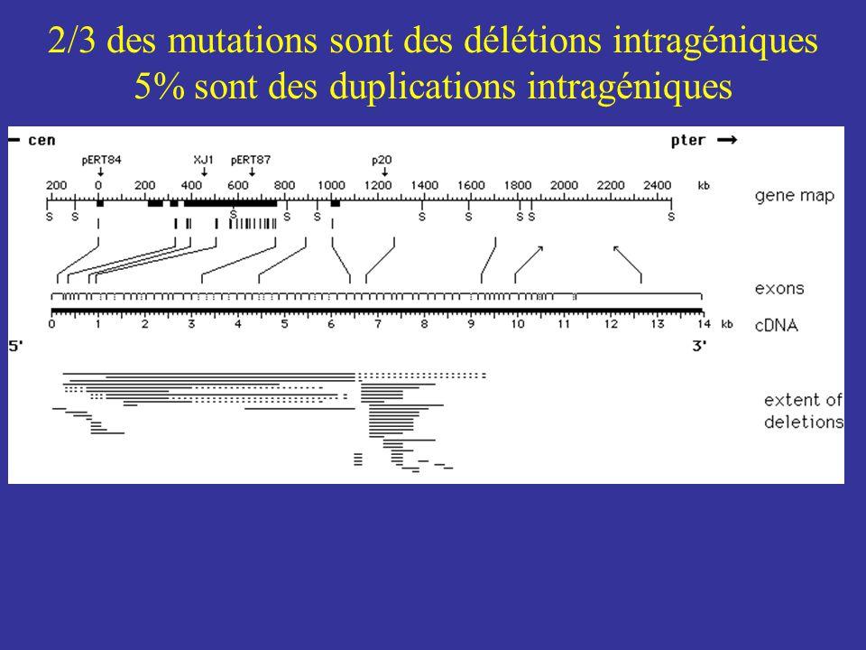 2/3 des mutations sont des délétions intragéniques 5% sont des duplications intragéniques