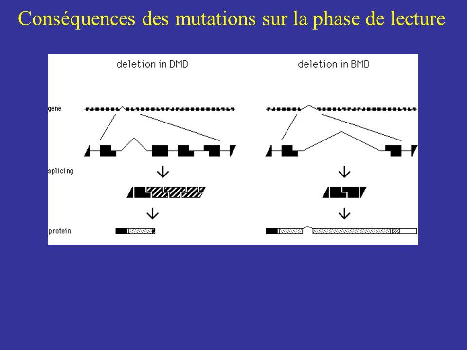 Conséquences des mutations sur la phase de lecture