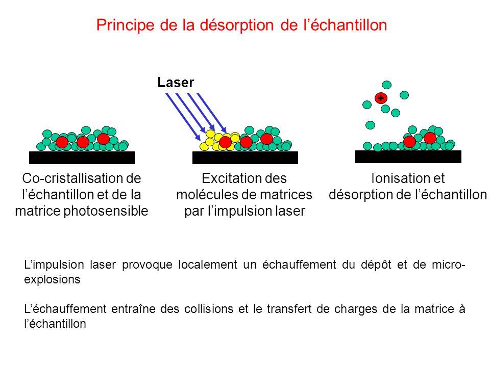 Co-cristallisation de léchantillon et de la matrice photosensible Excitation des molécules de matrices par limpulsion laser Laser + Ionisation et désorption de léchantillon Principe de la désorption de léchantillon Limpulsion laser provoque localement un échauffement du dépôt et de micro- explosions Léchauffement entraîne des collisions et le transfert de charges de la matrice à léchantillon