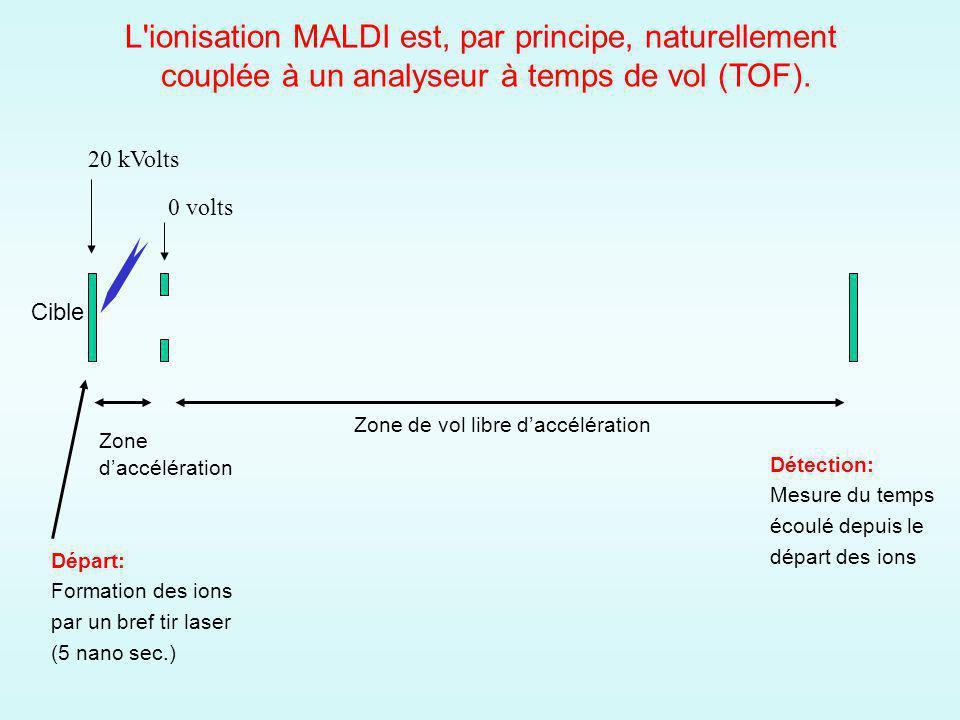 L ionisation MALDI est, par principe, naturellement couplée à un analyseur à temps de vol (TOF).