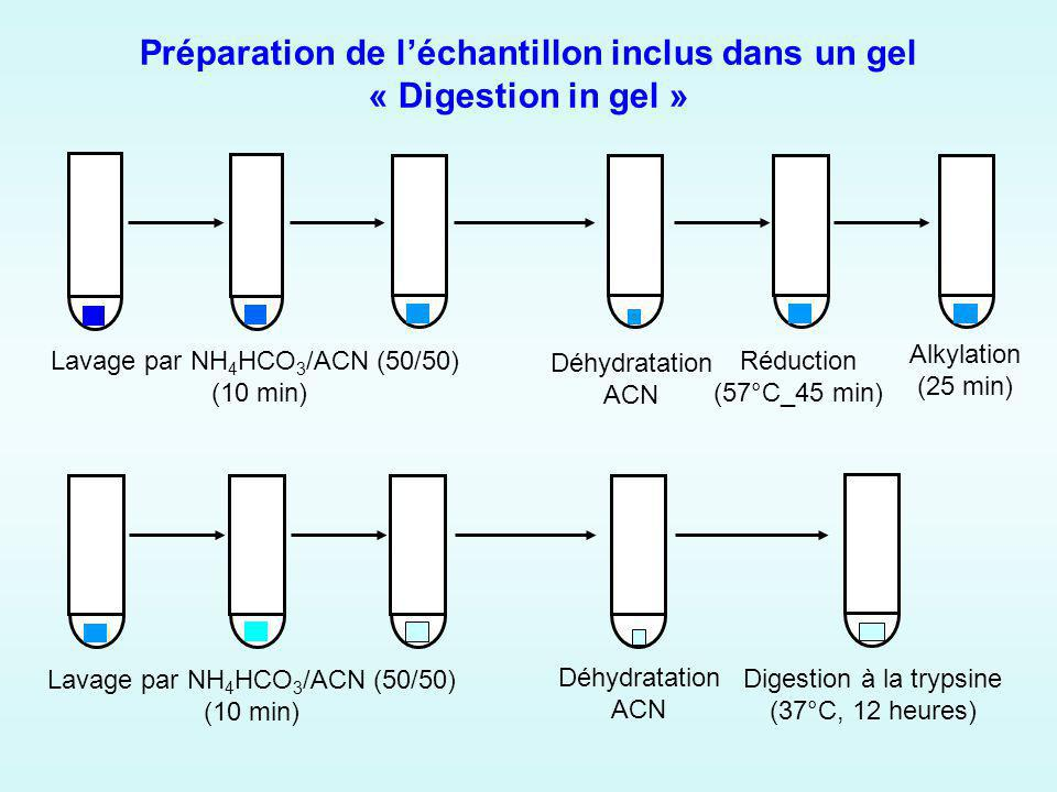 Préparation de léchantillon inclus dans un gel « Digestion in gel » Lavage par NH 4 HCO 3 /ACN (50/50) (10 min) Déhydratation ACN Réduction (57°C_45 m