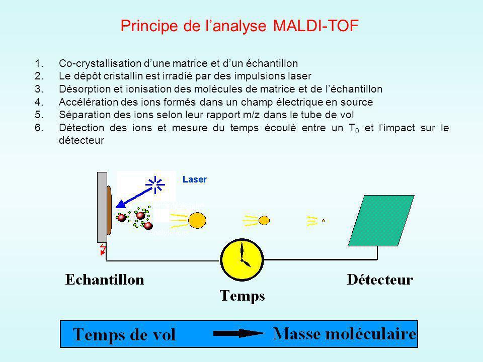 Principe de lanalyse MALDI-TOF 1.Co-crystallisation dune matrice et dun échantillon 2.Le dépôt cristallin est irradié par des impulsions laser 3.Désorption et ionisation des molécules de matrice et de léchantillon 4.Accélération des ions formés dans un champ électrique en source 5.Séparation des ions selon leur rapport m/z dans le tube de vol 6.Détection des ions et mesure du temps écoulé entre un T 0 et limpact sur le détecteur