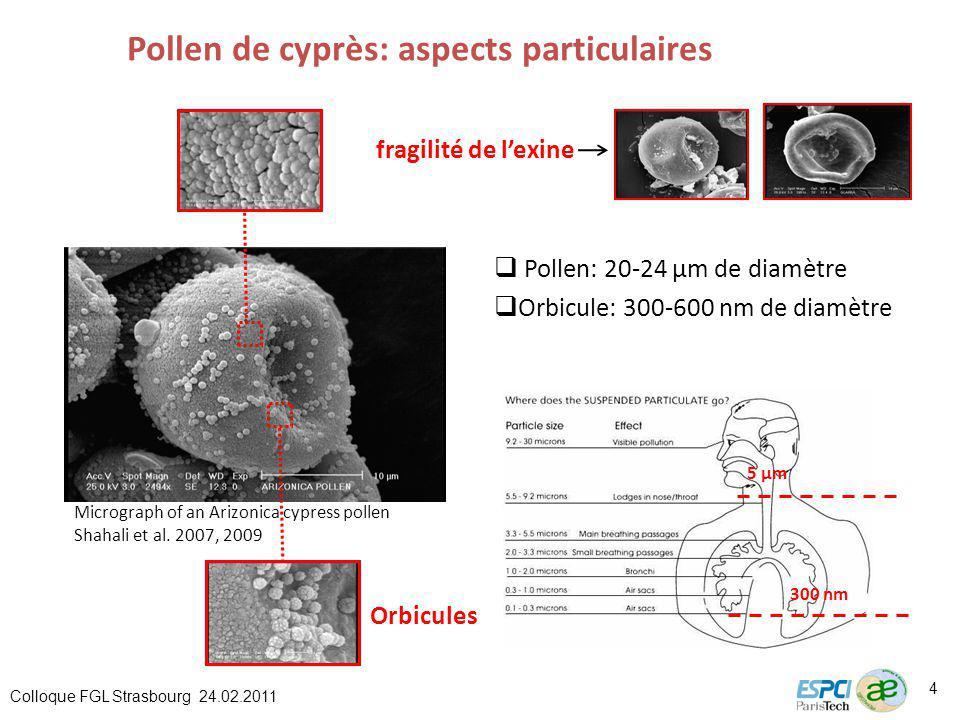 Pollen de cyprès: aspects particulaires Pollen: 20-24 µm de diamètre fragilité de lexine Orbicules Micrograph of an Arizonica cypress pollen Shahali et al.