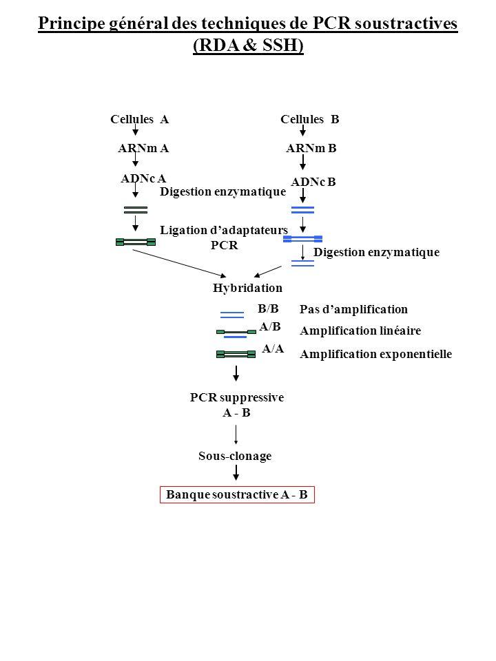 Principe général des techniques de PCR soustractives (RDA & SSH) Hybridation PCR suppressive A - B Sous-clonage Banque soustractive A - B A/A A/B B/B
