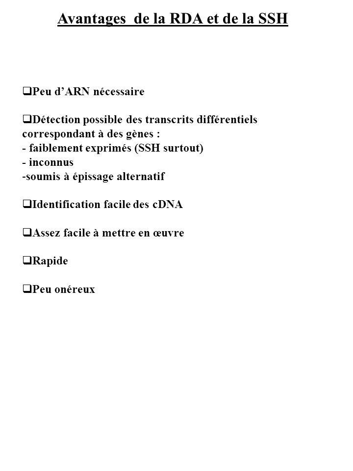 Avantages de la RDA et de la SSH Peu dARN nécessaire Détection possible des transcrits différentiels correspondant à des gènes : - faiblement exprimés