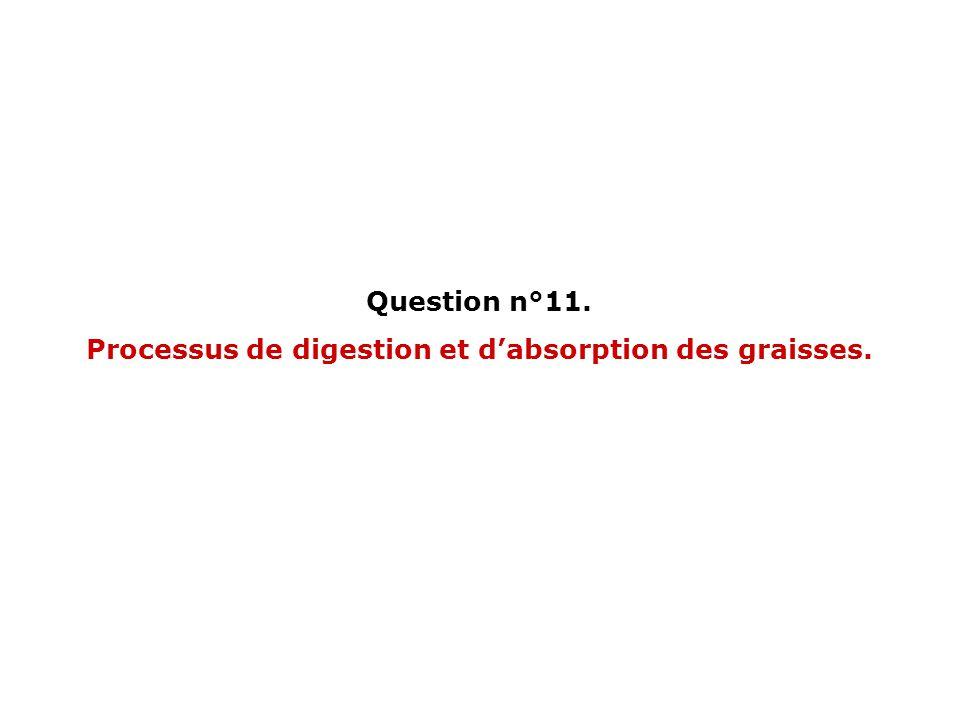 Question n°11. Processus de digestion et dabsorption des graisses.