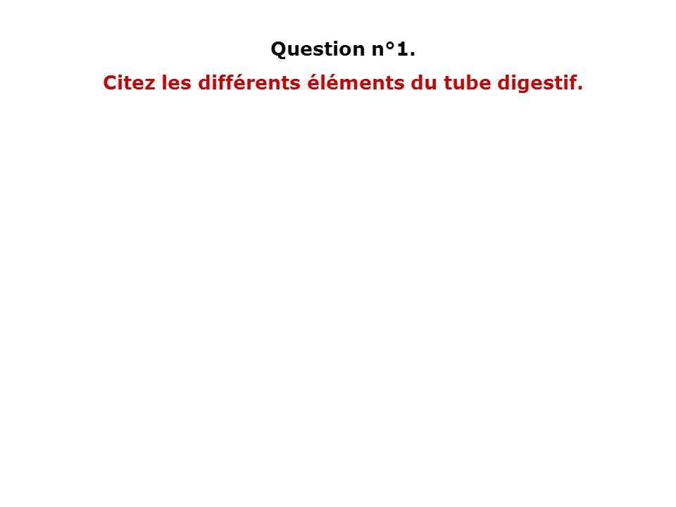 Question n°1. Citez les différents éléments du tube digestif.