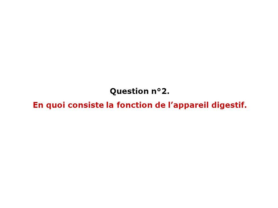 Question n°2. En quoi consiste la fonction de lappareil digestif.