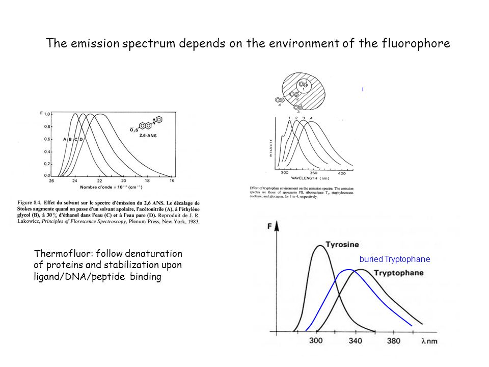 The emission spectrum depends on the environment of the fluorophore Thermofluor: follow denaturation of proteins and stabilization upon ligand/DNA/pep