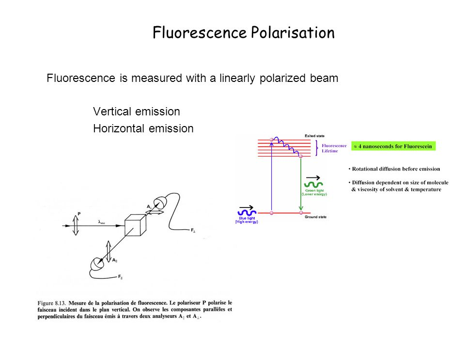 Fluorescence Polarisation Fluorescence is measured with a linearly polarized beam Vertical emission Horizontal emission
