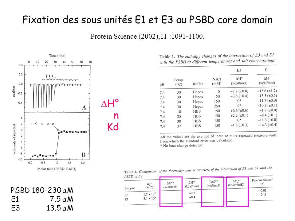 Fixation des sous unités E1 et E3 au PSBD core domain Protein Science (2002),11 :1091-1100. PSBD 180-230 M E1 7.5 M E3 13.5 M H° n Kd