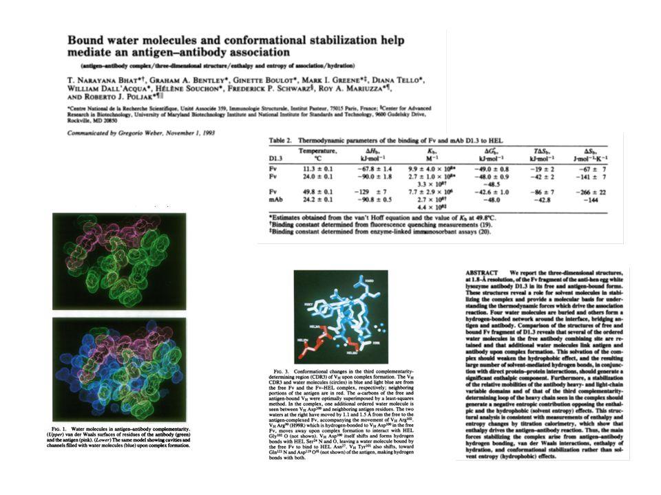 Dans le cadre de relations structure-fonction, lutilisation de mutants ponctuels permet dévaluer quantitativement les contributions énergétiques des diverses interactions.