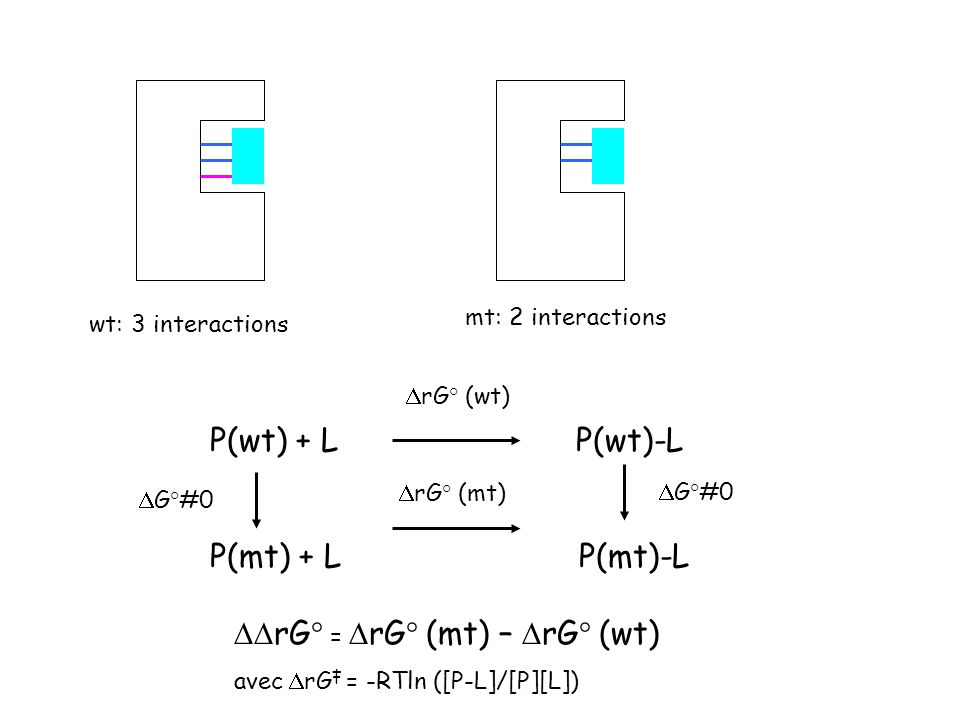 wt: 3 interactions mt: 2 interactions P(wt) + L P(wt)-L P(mt) + L P(mt)-L rG° = rG° (mt) – rG° (wt) avec rG = -RTln ([P-L]/[P][L]) rG° (wt) rG° (mt) G