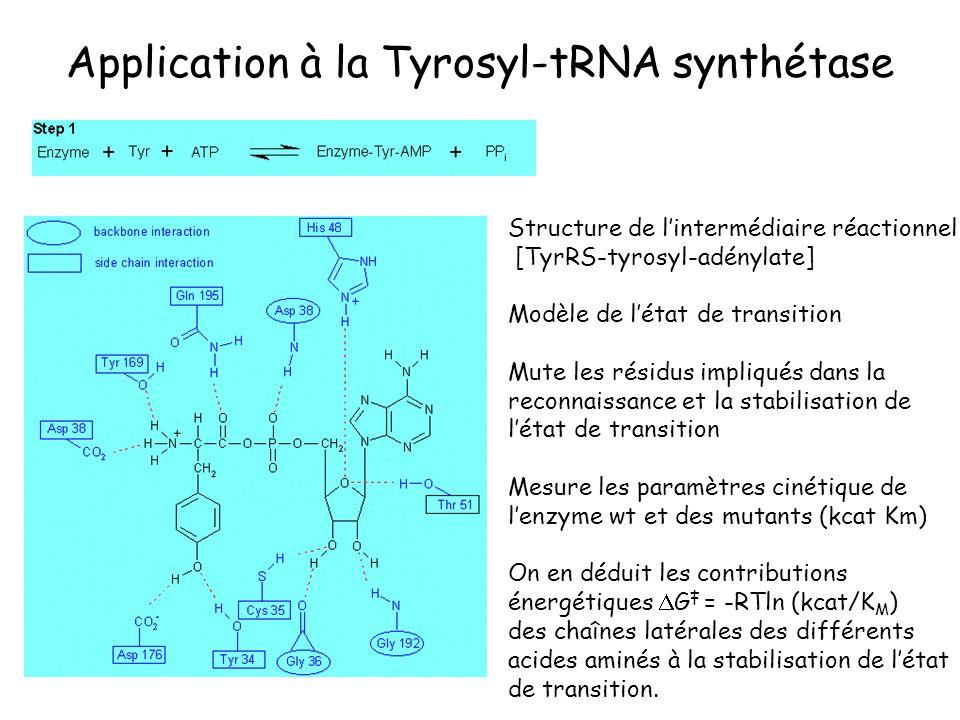 Application à la Tyrosyl-tRNA synthétase Structure de lintermédiaire réactionnel [TyrRS-tyrosyl-adénylate] Modèle de létat de transition Mute les rési