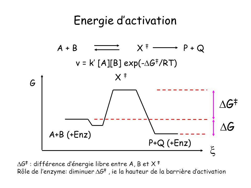 G : différence dénergie libre entre A, B et X Rôle de lenzyme: diminuer G, ie la hauteur de la barrière dactivation G A+B (+Enz) P+Q (+Enz) X G G A +