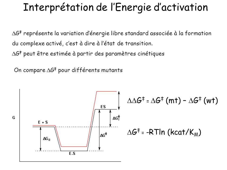 On compare G pour différents mutants Interprétation de lEnergie dactivation G représente la variation dénergie libre standard associée à la formation