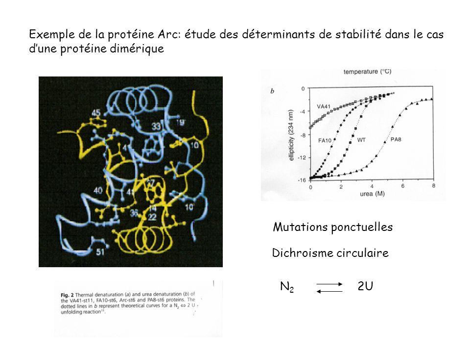 Exemple de la protéine Arc: étude des déterminants de stabilité dans le cas dune protéine dimérique Mutations ponctuelles Dichroisme circulaire N 2 2U