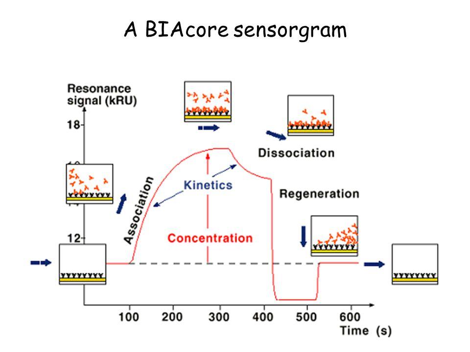A BIAcore sensorgram