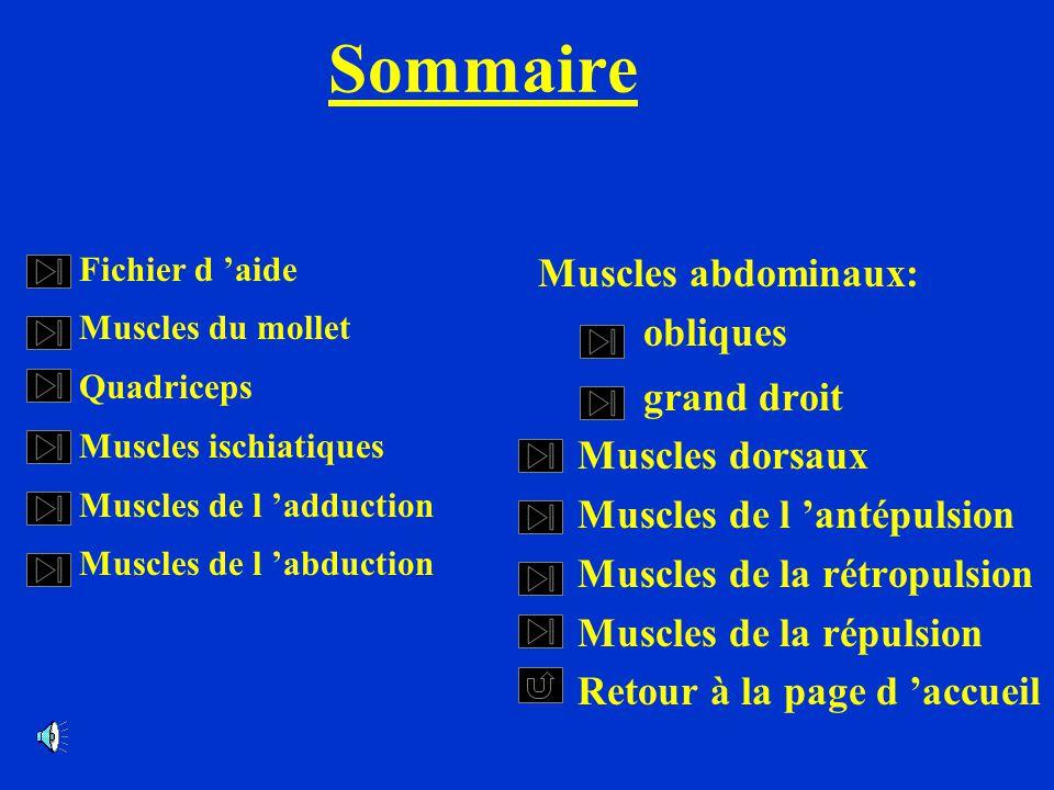 Sommaire Fichier d aide Muscles du mollet Quadriceps Muscles ischiatiques Muscles de l adduction Muscles de l abduction Muscles abdominaux: obliques g