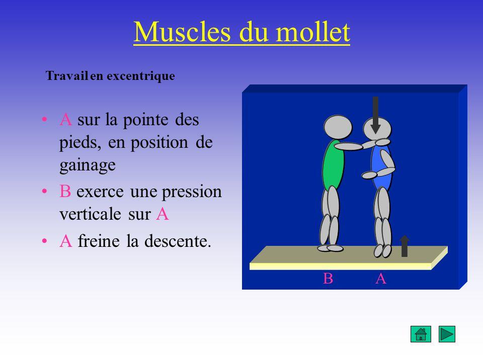 Muscles du mollet A sur la pointe des pieds, en position de gainage B exerce une pression verticale sur A A freine la descente. AB Travail en excentri