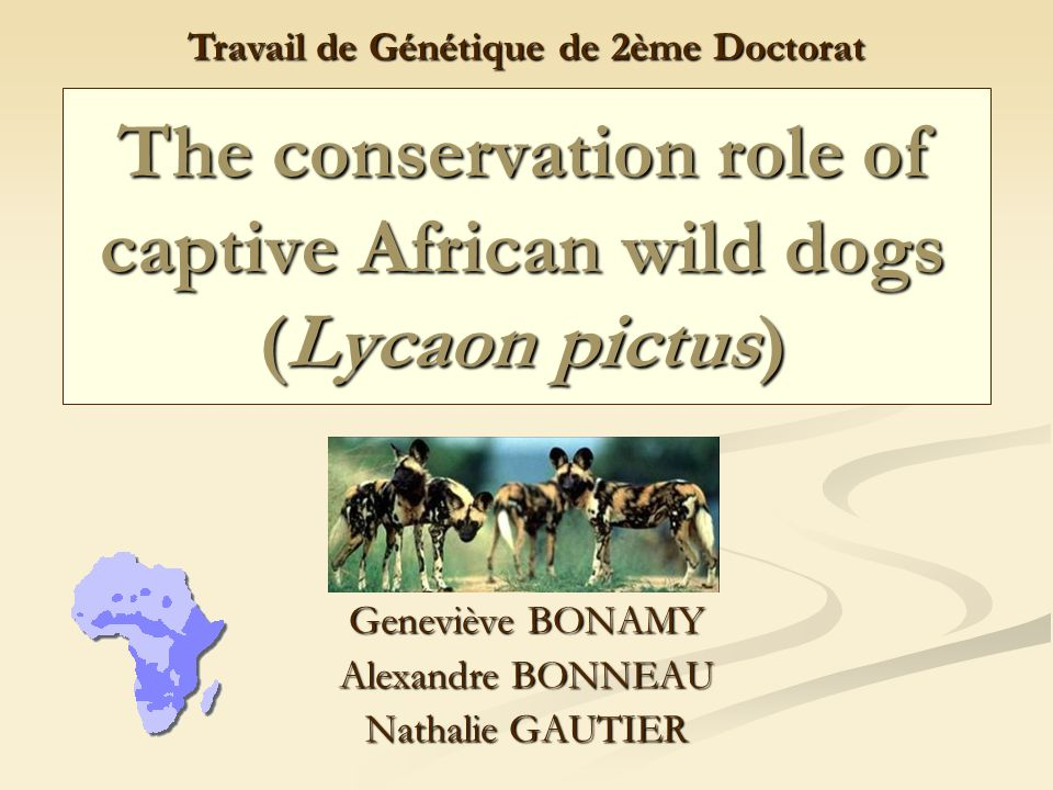 10 Mars 2006 2Génétique - 2ème Doctorat Introduction Lycaon pictus = chiens sauvages africains Lycaon pictus = chiens sauvages africains En DANGER !!!.