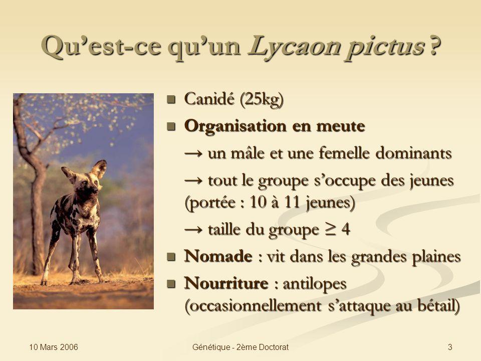 10 Mars 2006 3Génétique - 2ème Doctorat Quest-ce quun Lycaon pictus ? Canidé (25kg) Organisation en meute un mâle et une femelle dominants tout le gro