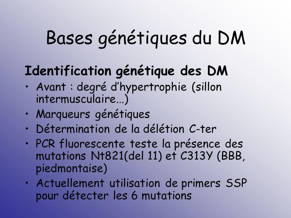 Bases génétiques du DM Identification génétique des DM Avant : degré dhypertrophie (sillon intermusculaire...) Marqueurs génétiques Détermination de l