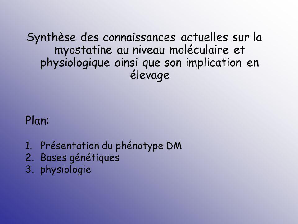Le phénotype DM (double muscling) Hypertrophie des muscles surtout sur les régions proximales des membres ant.