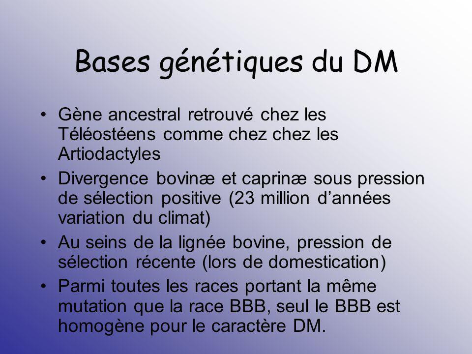 Bases génétiques du DM 6 mutations identifiées (mutant mh): BBB: Nt 821(del 11) ; protéine tronquée C ter Piemontaise et gasconne : G A = C313Y ; perturbation pont SS Nt 419 (del7-ins10) C T Nt 616 (exon 2) Q204X G T Nt 676 (exon 2) E226X G T Nt 874 (exon 3) E291X