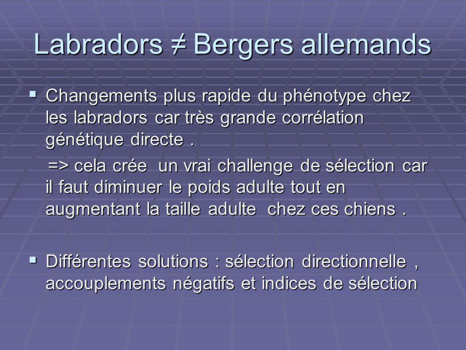 Labradors Bergers allemands Changements plus rapide du phénotype chez les labradors car très grande corrélation génétique directe.