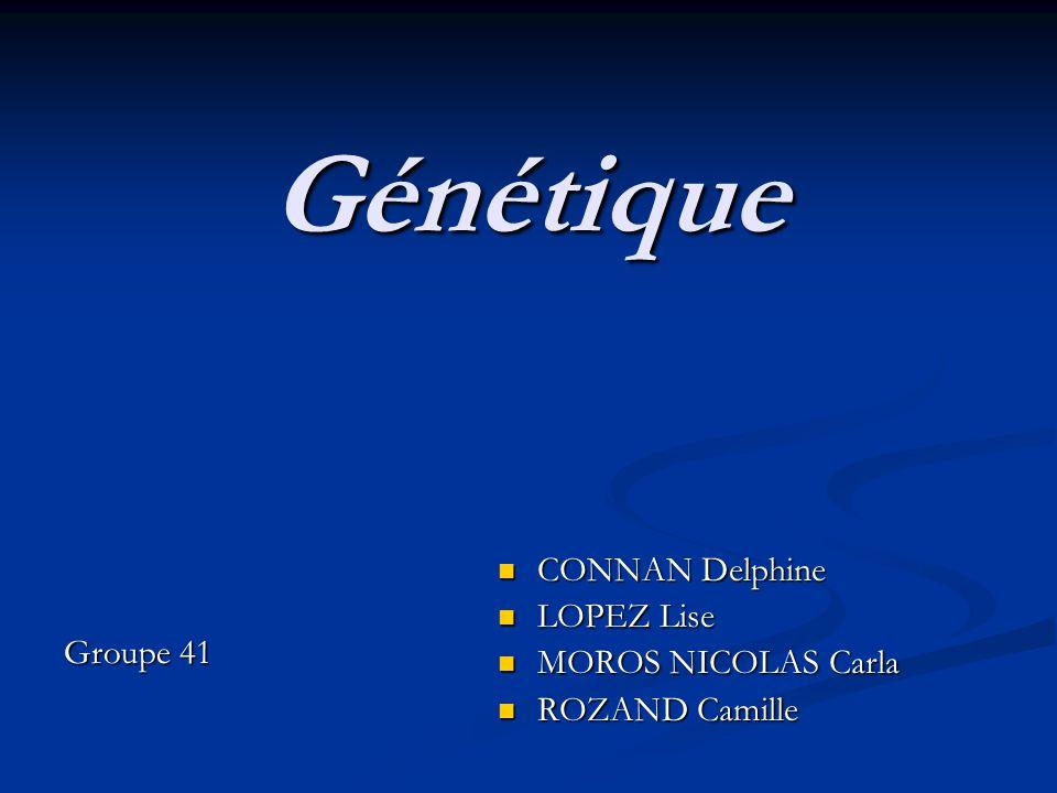 Génétique Groupe 41 CONNAN Delphine LOPEZ Lise MOROS NICOLAS Carla ROZAND Camille