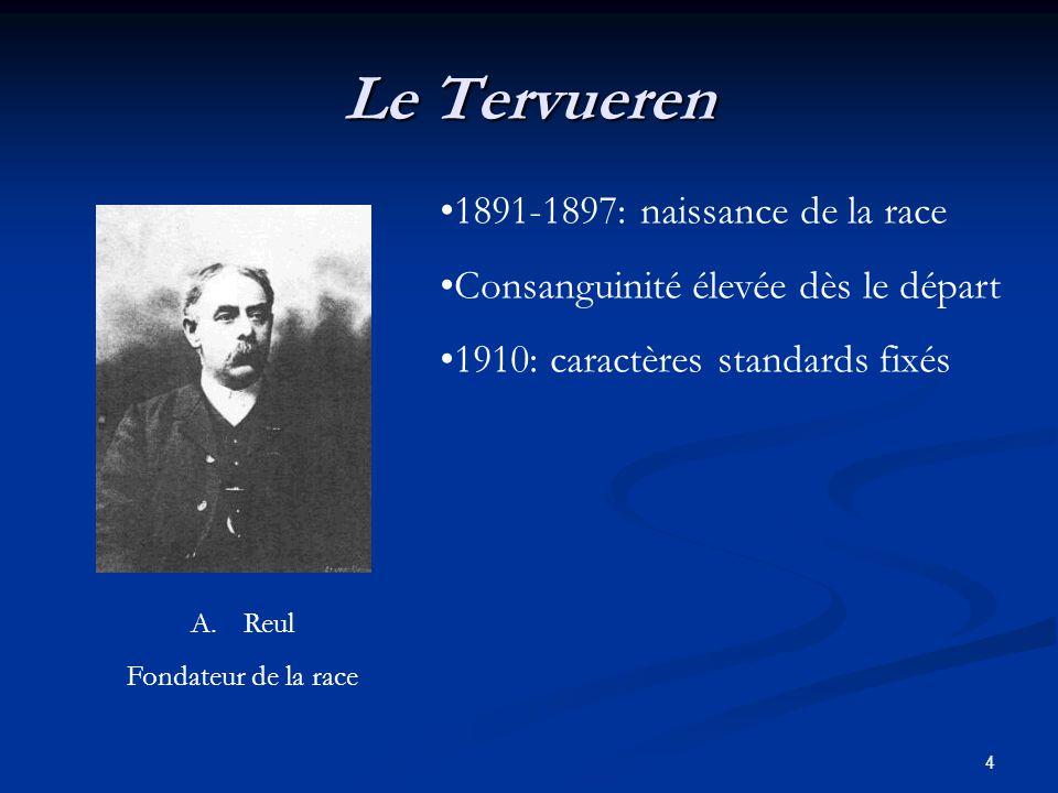 4 Le Tervueren 1891-1897: naissance de la race Consanguinité élevée dès le départ 1910: caractères standards fixés A.Reul Fondateur de la race