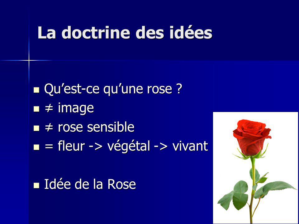 Quest-ce quune rose .Quest-ce quune rose .