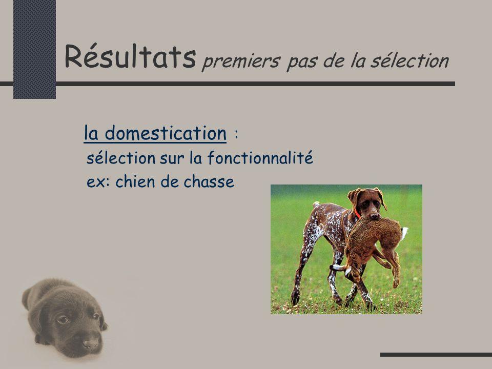 Résultats premiers pas de la sélection la domestication : sélection sur la fonctionnalité ex: chien de chasse
