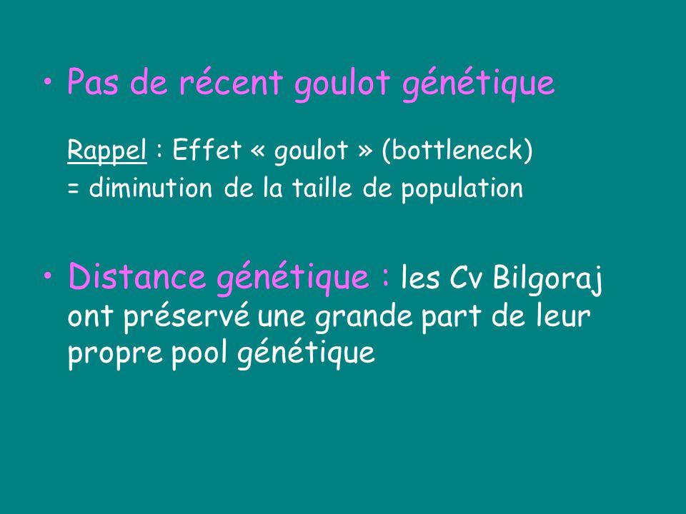 Pas de récent goulot génétique Rappel : Effet « goulot » (bottleneck) = diminution de la taille de population Distance génétique : les Cv Bilgoraj ont préservé une grande part de leur propre pool génétique