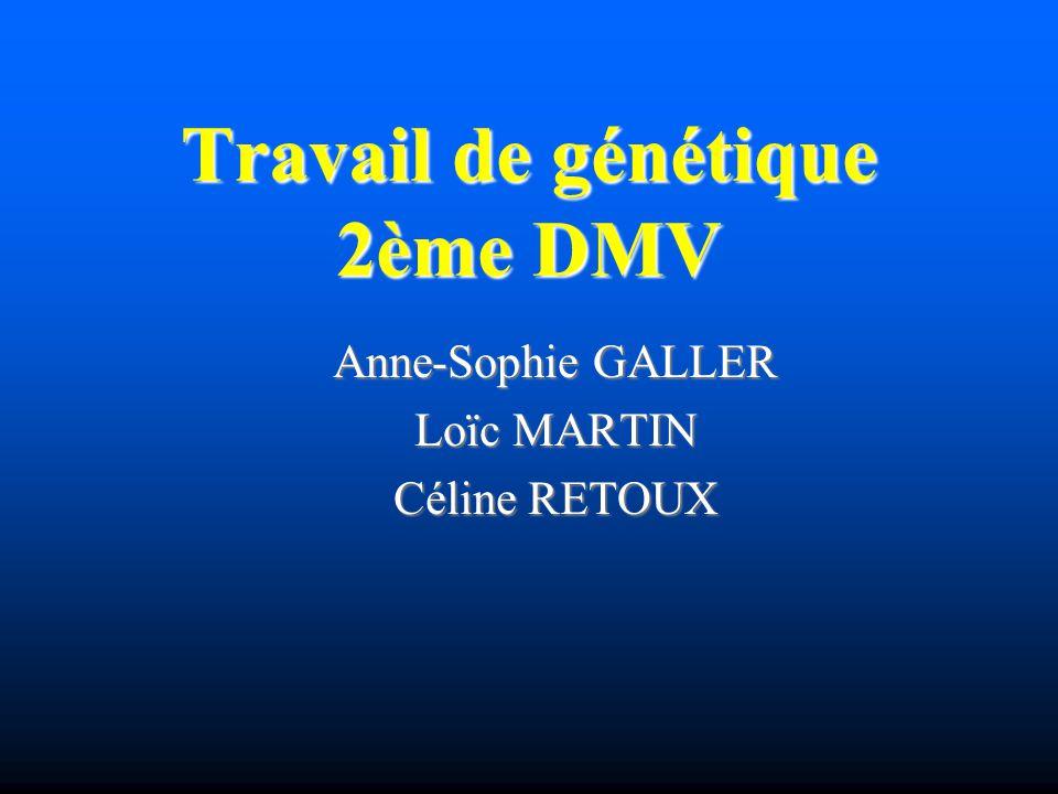 Travail de génétique 2ème DMV Anne-Sophie GALLER Loïc MARTIN Céline RETOUX