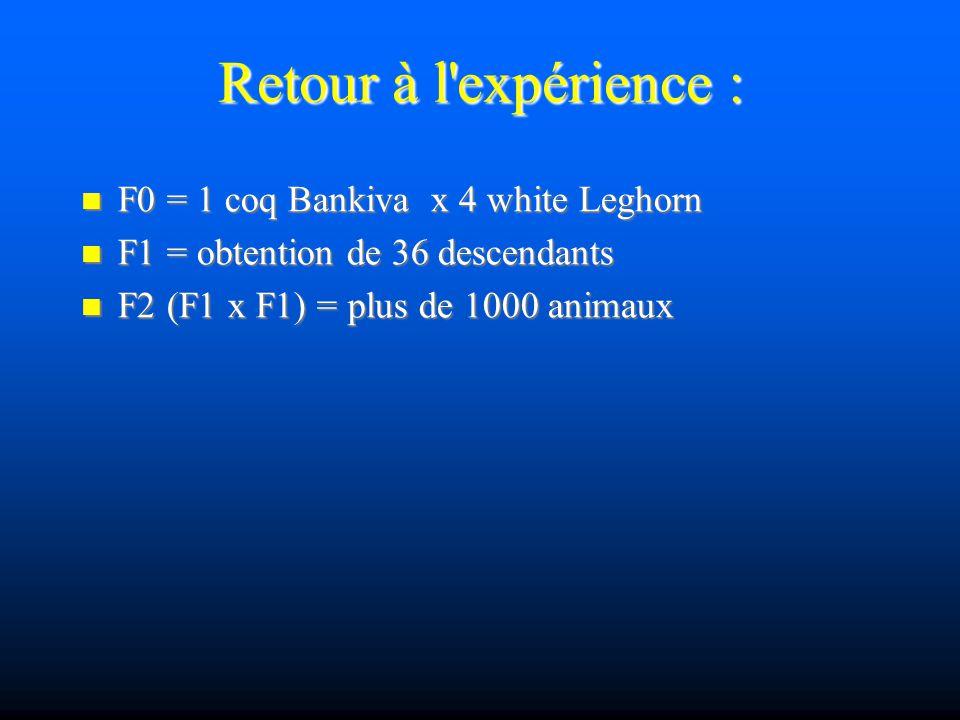 Retour à l'expérience : F0 = 1 coq Bankiva x 4 white Leghorn F0 = 1 coq Bankiva x 4 white Leghorn F1 = obtention de 36 descendants F1 = obtention de 3