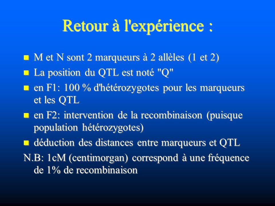 Retour à l'expérience : M et N sont 2 marqueurs à 2 allèles (1 et 2) M et N sont 2 marqueurs à 2 allèles (1 et 2) La position du QTL est noté