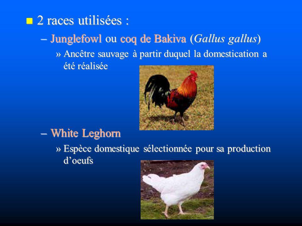 2 races utilisées : 2 races utilisées : –Junglefowl ou coq de Bakiva (Gallus gallus) »Ancêtre sauvage à partir duquel la domestication a été réalisée