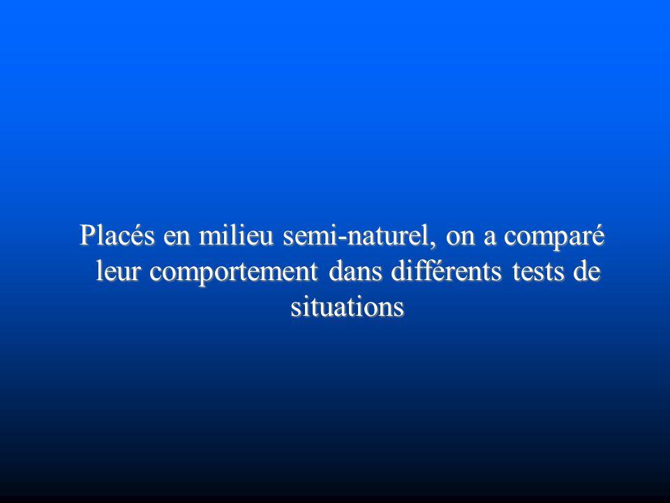 Placés en milieu semi-naturel, on a comparé leur comportement dans différents tests de situations Placés en milieu semi-naturel, on a comparé leur com