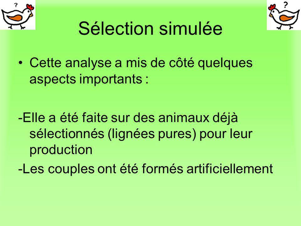 Sélection simulée Cette analyse a mis de côté quelques aspects importants : -Elle a été faite sur des animaux déjà sélectionnés (lignées pures) pour l