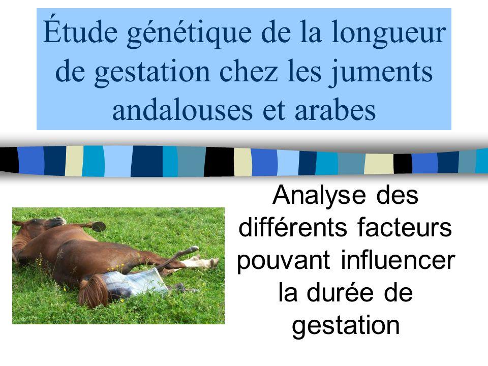 Étude génétique de la longueur de gestation chez les juments andalouses et arabes Analyse des différents facteurs pouvant influencer la durée de gesta