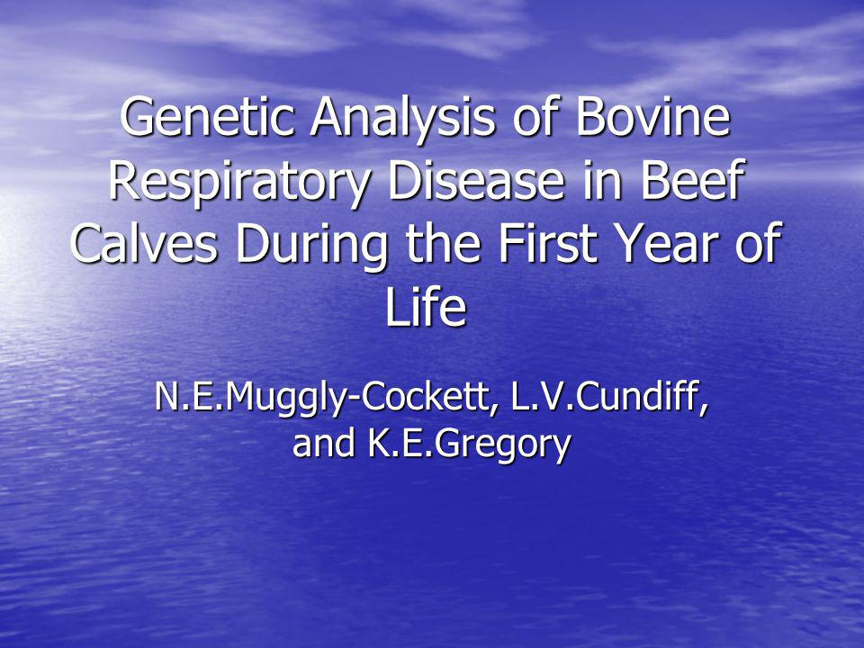 Genetic Analysis of Bovine Respiratory Disease in Beef Calves During the First Year of Life N.E.Muggly-Cockett, L.V.Cundiff, and K.E.Gregory