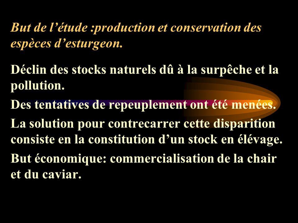 But de létude :production et conservation des espèces desturgeon.