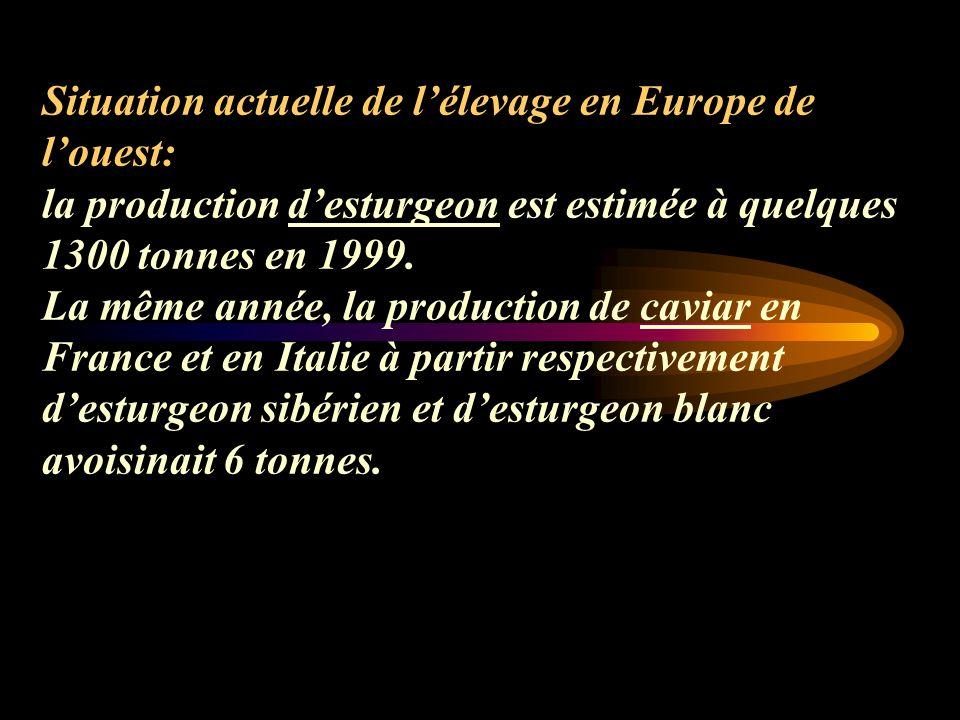 Situation actuelle de lélevage en Europe de louest: la production desturgeon est estimée à quelques 1300 tonnes en 1999.
