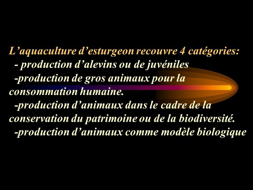 Laquaculture desturgeon recouvre 4 catégories: - production dalevins ou de juvéniles -production de gros animaux pour la consommation humaine.