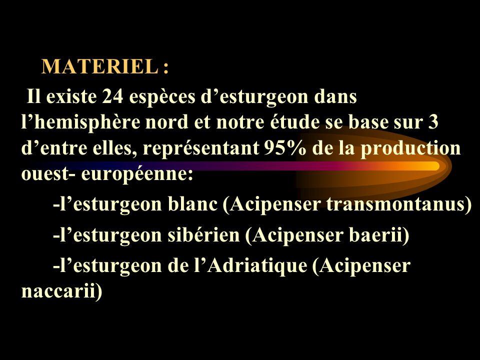 MATERIEL : Il existe 24 espèces desturgeon dans lhemisphère nord et notre étude se base sur 3 dentre elles, représentant 95% de la production ouest- européenne: -lesturgeon blanc (Acipenser transmontanus) -lesturgeon sibérien (Acipenser baerii) -lesturgeon de lAdriatique (Acipenser naccarii)