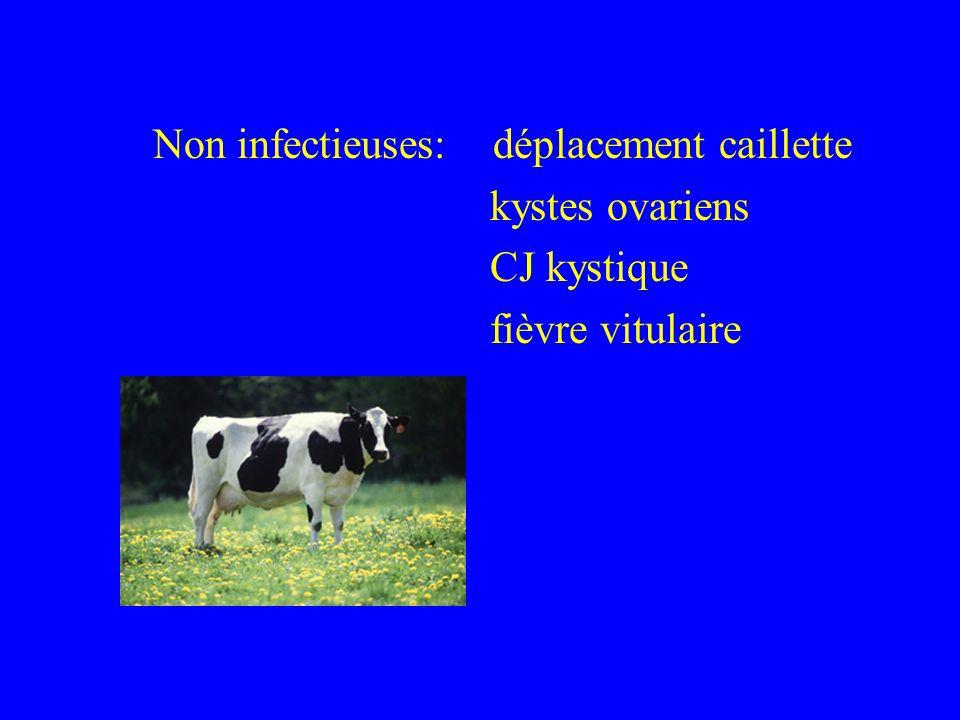 Non infectieuses: déplacement caillette kystes ovariens CJ kystique fièvre vitulaire