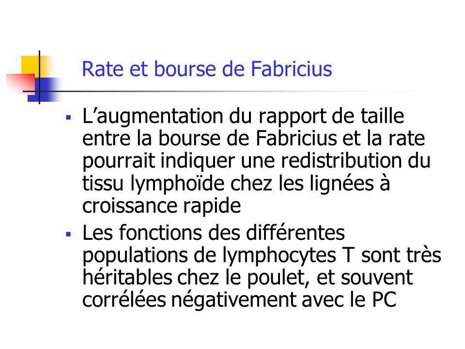 Rate et bourse de Fabricius Laugmentation du rapport de taille entre la bourse de Fabricius et la rate pourrait indiquer une redistribution du tissu l